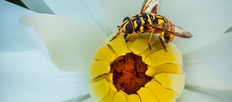 lilly with bee1.jpg
