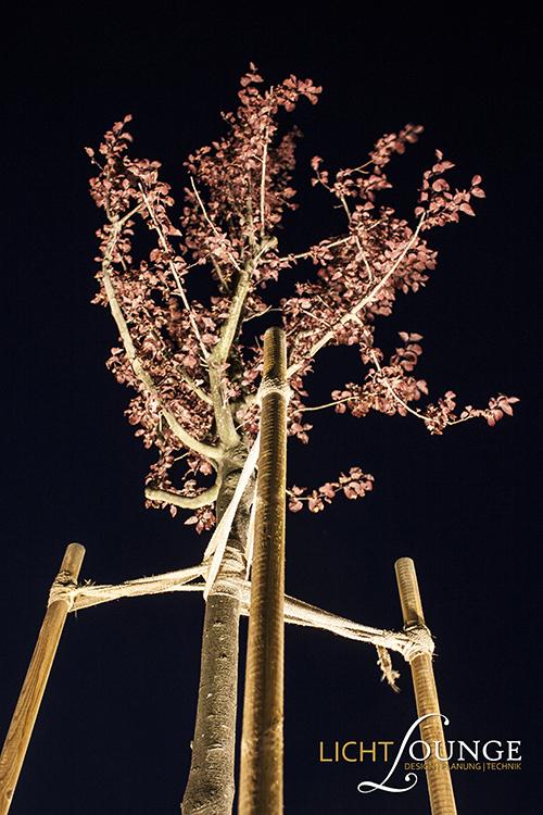 Beleuchtung Baum