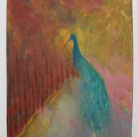 Peacock, 2020