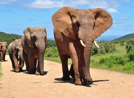 8 curiosidades rápidas sobre o mundo animal