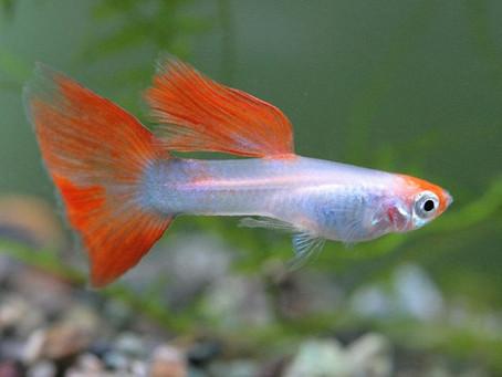 Curiosidades sobre peixes: 8 fatos sobre as espécies mais comuns