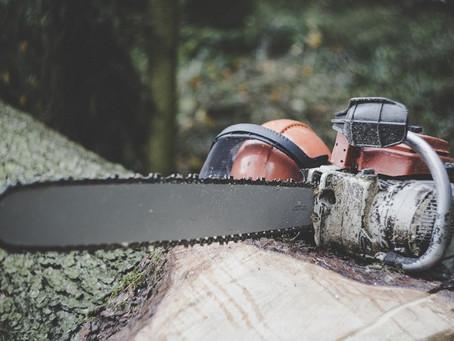 Desmatamento é o tema ambiental que mais preocupa os brasileiros, diz pesquisa