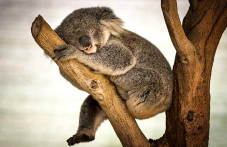 6 fatos curiosos sobre o reino animal