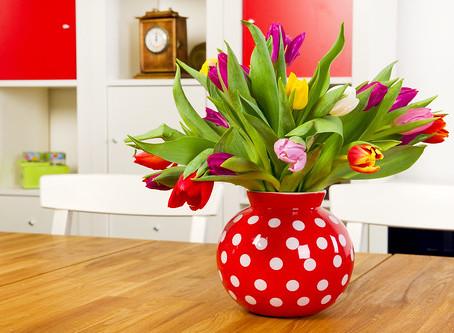 Dicas de como cuidar das plantas em casa