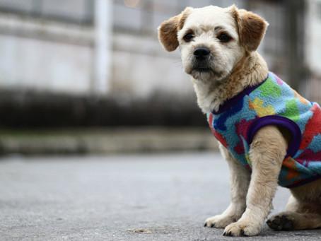 Cachorro idoso: 8 dicas para cuidar do seu cão de idade