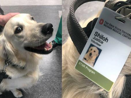 Hospital contrata cachorro para confortar funcionários