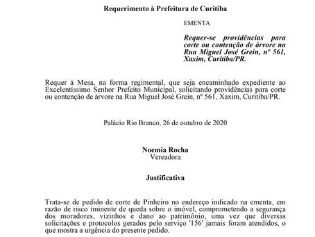 Corte ou contenção de árvore na Rua Miguel José Grein, nº 561