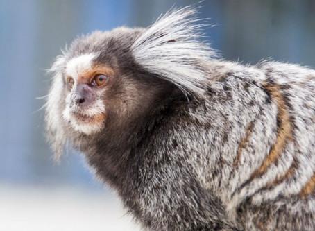 10 animais exóticos que podem ser pets