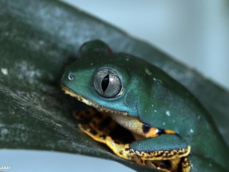 Restauração ecológica é decisiva para impedir extinções em massa, diz estudo