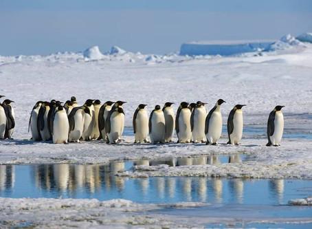 Cientistas descobrem novas colônias de pinguins com imagens de satélite