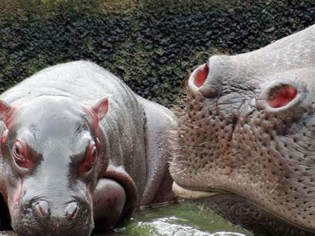 Zoológico de Curitiba libera mais ingressos para visitação a pé. Já reservou o seu?
