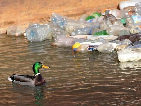 Poluição de plástico nos oceanos pode triplicar e chegar a 600 milhões de toneladas até 2040