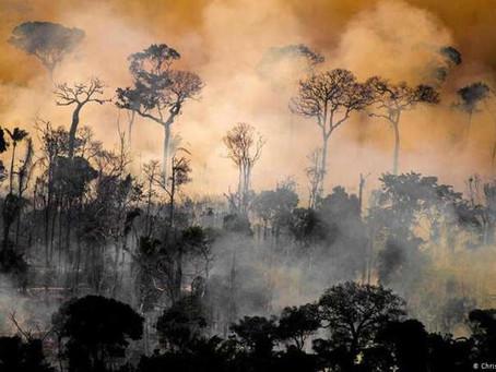 Incêndios na Amazônia deixam rastro de destruição por décadas