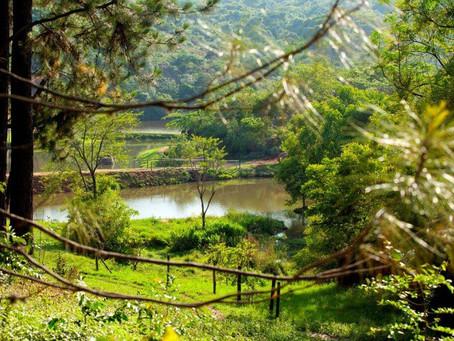 10 dicas para preservar o meio ambiente