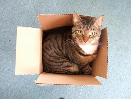 Por que gatos gostam de caixas?