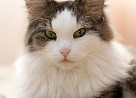 Comportamento felino: curiosidades sobre os gatos!