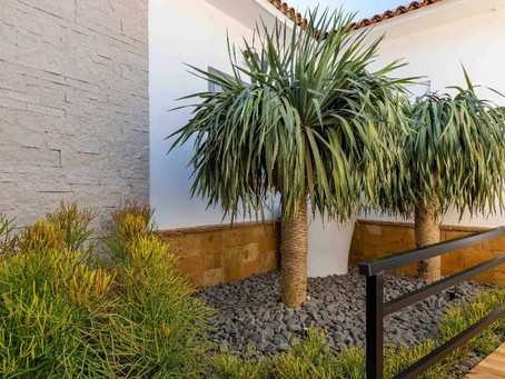Planta que vai bem: xerófitas como cactos e suculentas são fáceis de cuidar
