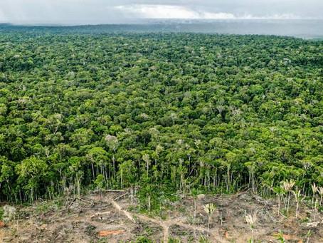 Produzir e preservar: desenvolvimento sustentável é o futuro da Amazônia