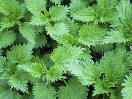 Nettles don't just sting.