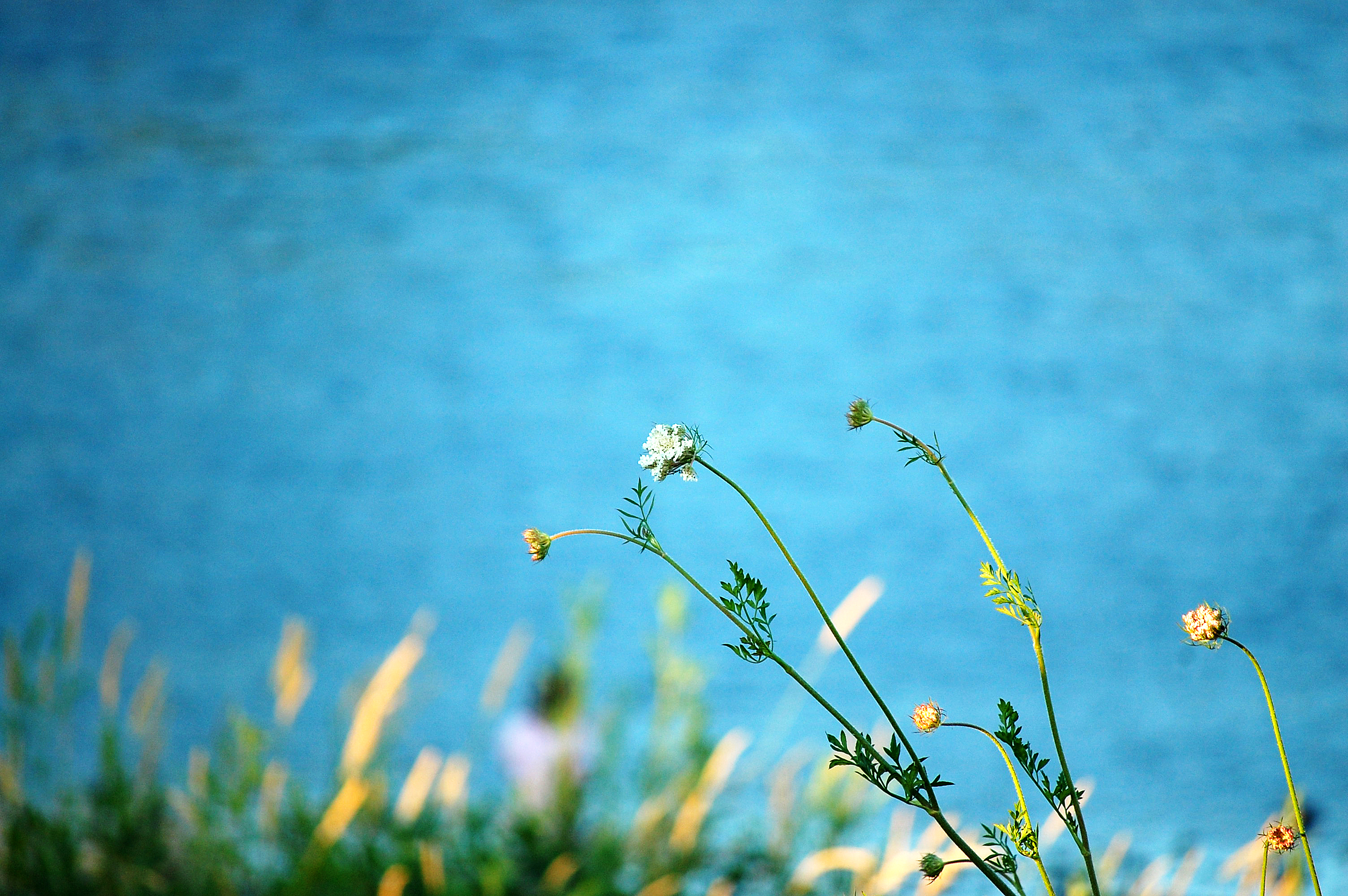 Weeds at the River.jpg