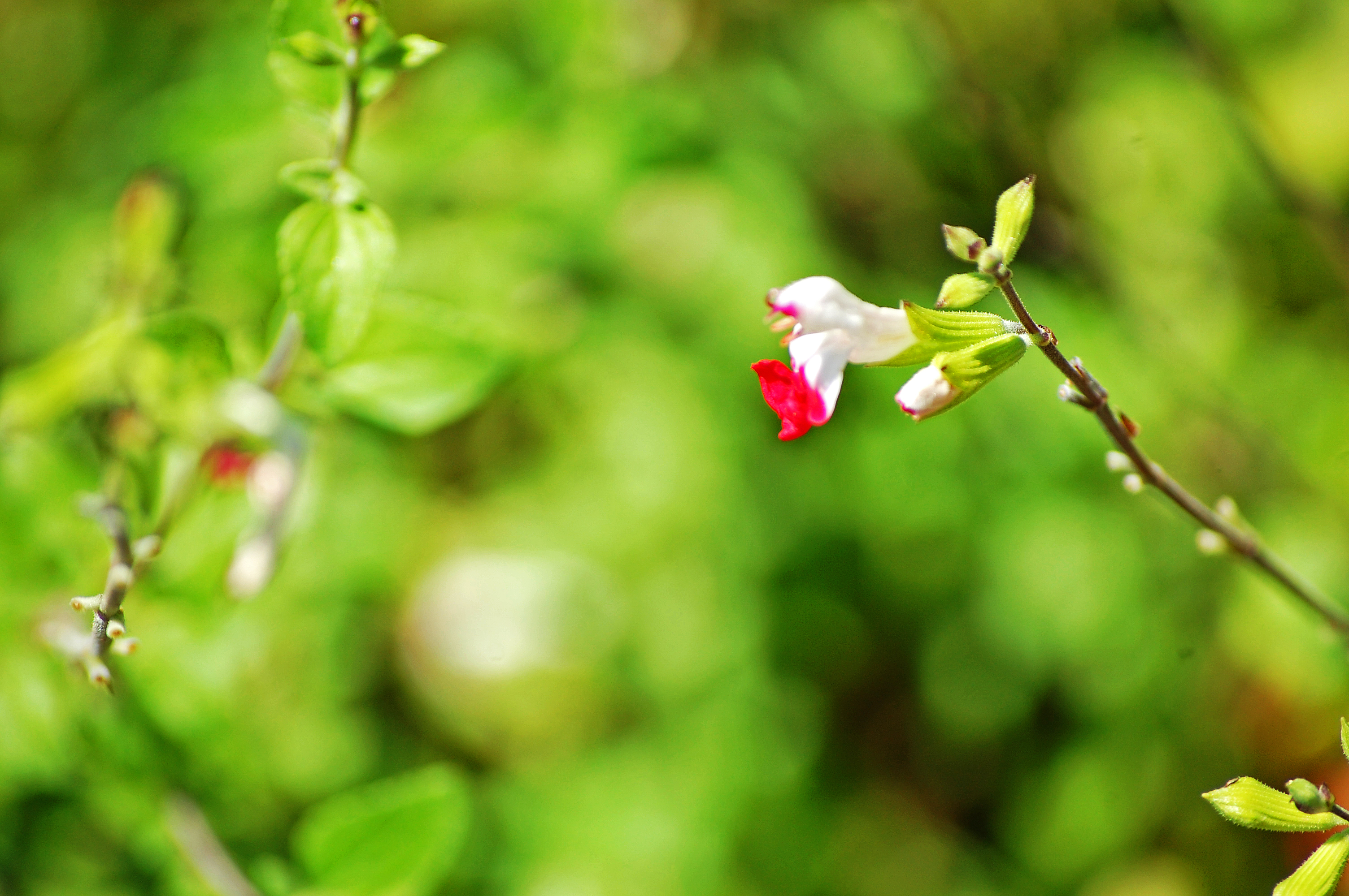 White and Pink Flower.jpg