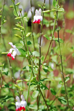 Red and White Flowers copy.jpg