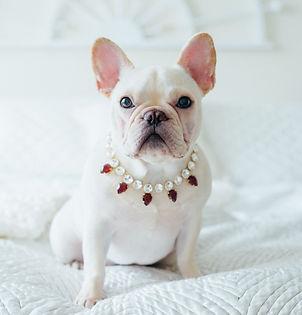 Puppies wearing TrendingAbove Jewelry