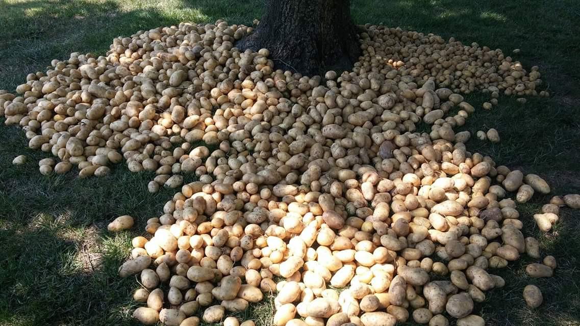 A chi non piacciono le patate??