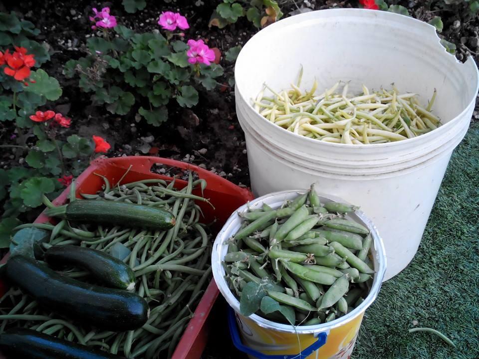 Fagiolini, piselli e zucchine...