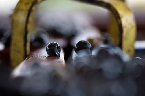 photographie vigne champagne