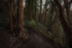 Photographie forêt