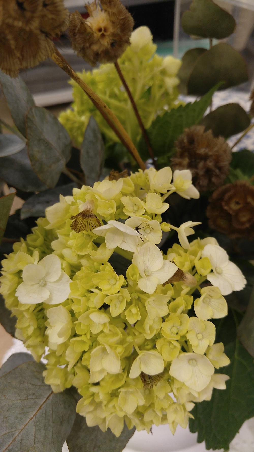 Scabiosa Pods, Hydrangea Flower, Custom Floral, McKenzie Botanicals, Wedding Flowers