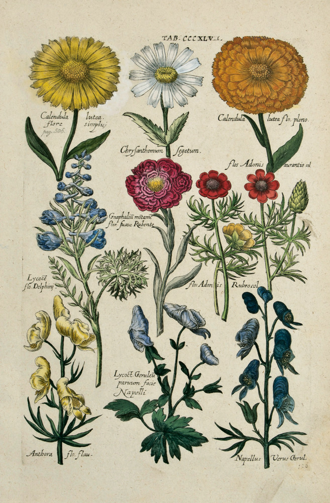 Botanical Flowers and Herbs -Google Images