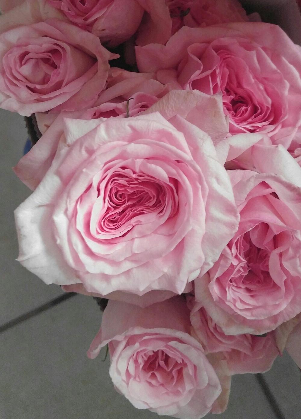 pink unique garden rose