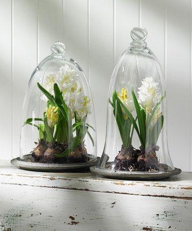 Spring Bulb Cloche - Google