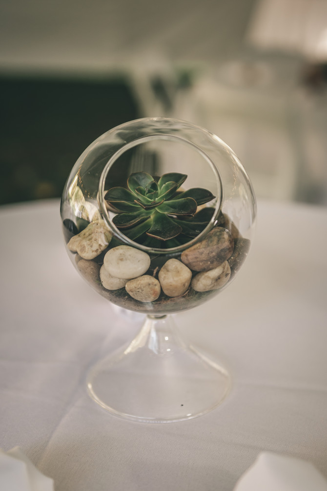 What's The Big Deal About Terrariums?
