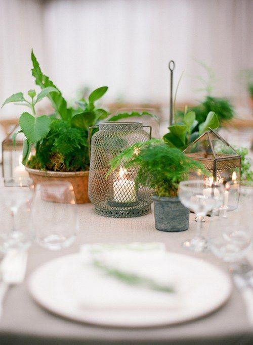 botanical centerpiece, plant centerpiece, natural centerpiece