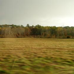 en lisière de forêt