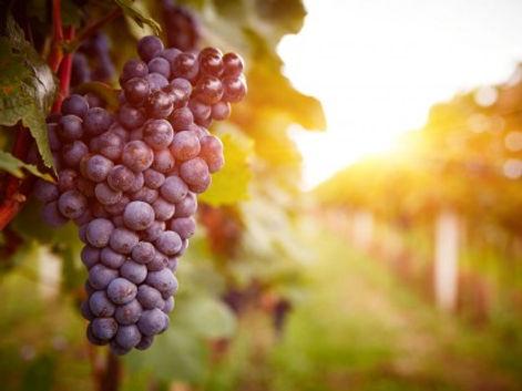 wine-tour-grapes-420x315.jpg