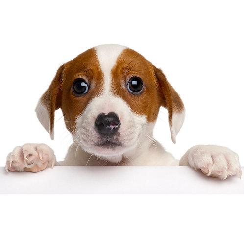 Dog Food (per lb)