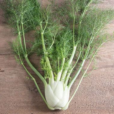 Fennel ON