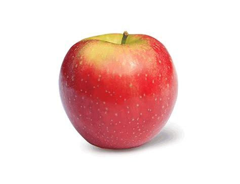 Apples Ambrosia BC very large