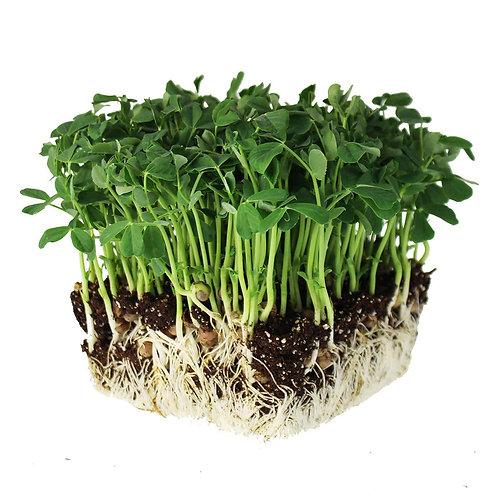 Sunflower Microgreens (per 100g)