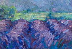 Le soir sur le champ de lavande