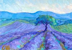 Le matin en Provence