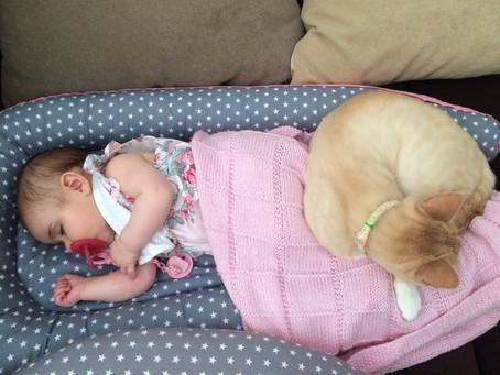Os gatos e os bebés