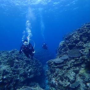 恩納村にて癒し系ダイビング