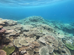 綺麗なサンゴ礁畑✨