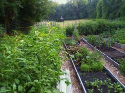 Morgan Farm Vegetable Garden July 2013 0