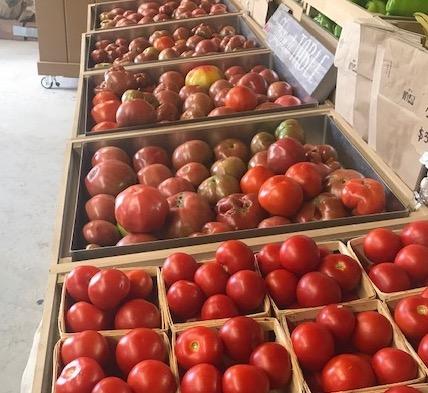 Tomatoes 8-2-19